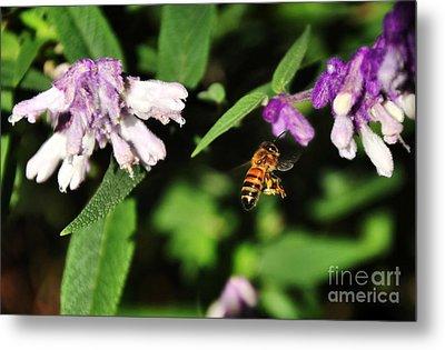 Bee In Flight Metal Print by Kaye Menner