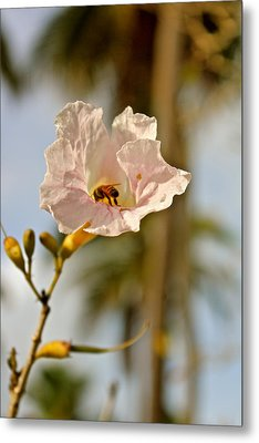 Bee In Paradise Metal Print by Felix Zapata
