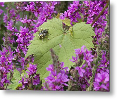 Bee On A Leaf Metal Print by Michel DesRoches