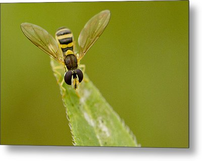 Bee On Belief  Metal Print by Dean Bennett