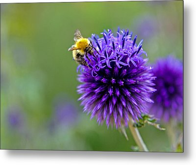 Bee On Garden Flower Metal Print