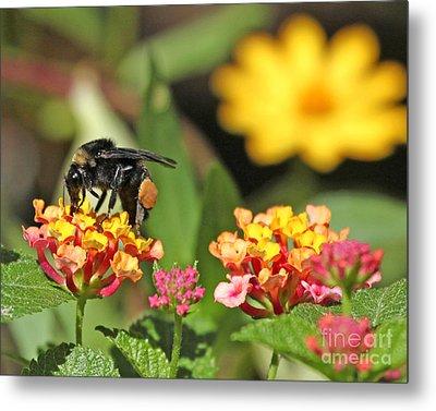Metal Print featuring the photograph Bee On Lantana Flower by Luana K Perez