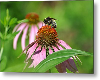 Metal Print featuring the photograph Bee On Pink Flower by Jodi Terracina