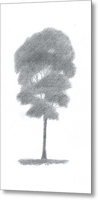 Beech Tree Drawing Number One Metal Print by Alan Daysh