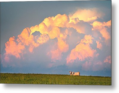 Metal Print featuring the photograph Beefy Thunder by Brian Duram