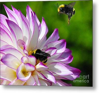 Metal Print featuring the photograph Bees N Blooms by Jack Moskovita