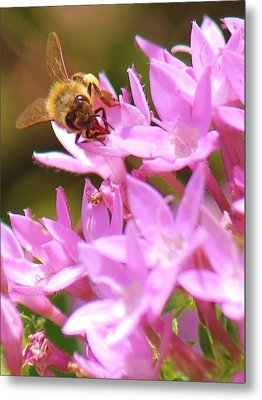Metal Print featuring the photograph Bees Two by Craig Wood