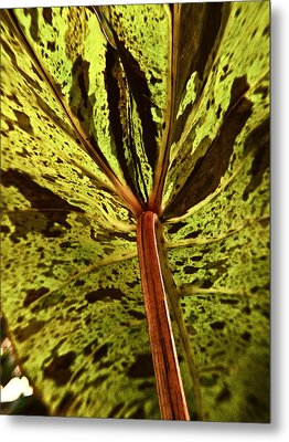 Behind The Leaves Metal Print by Joe Carini