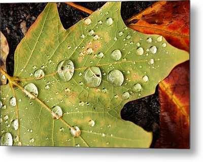 Bejeweled Leaves Metal Print by Matthew Green