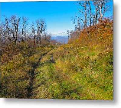 Belleayre Trail In Late Fall Metal Print
