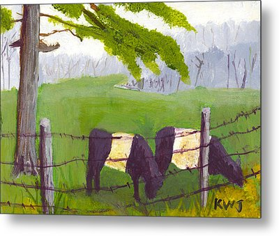 Belted Galloway Cow Painting Rockport Maine Metal Print by Keith Webber Jr
