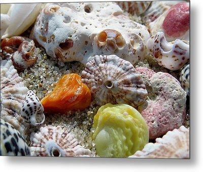 Bermuda Beach Shells Metal Print by Janice Drew