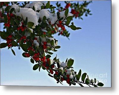Berries In Snow Metal Print