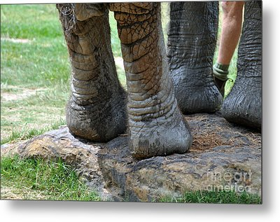 Best Foot Forward Metal Print