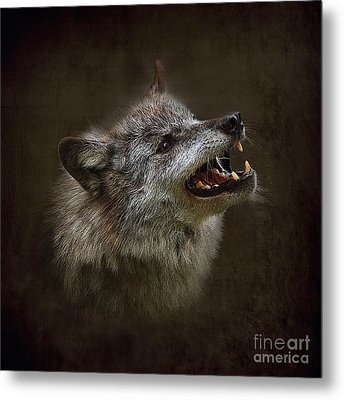 Big Bad Wolf Metal Print by Louise Heusinkveld