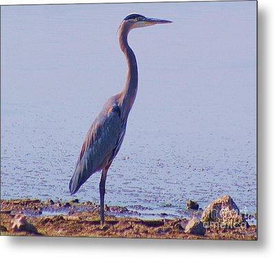 Metal Print featuring the digital art Big Blue Heron At Lake Side by John  Kolenberg