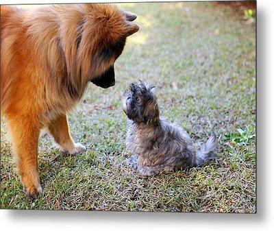 Big Dog, Small Dog Metal Print by Daniela Duncan