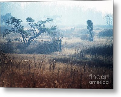 Big Meadows In Winter Metal Print by Thomas R Fletcher