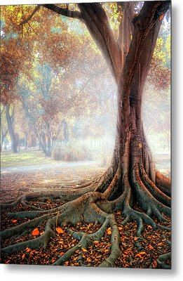 Big Tree Root Metal Print by Zu Sanchez Photography