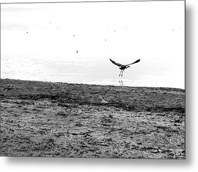 Bird And Beach Metal Print