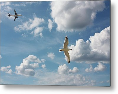 Bird And Flight Agaisnt Sky Metal Print by Fahid Chowdhury