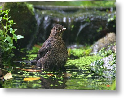 Bird Bath Metal Print