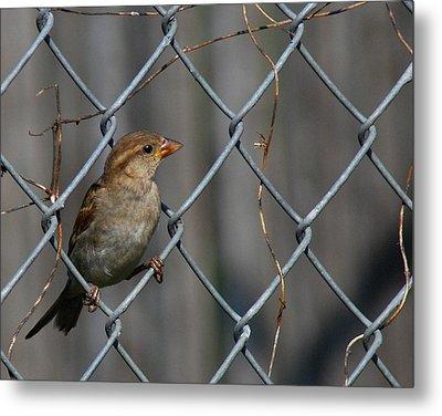 Bird In A Wire Metal Print by Joe Wicks