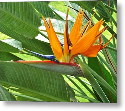 Metal Print featuring the photograph Bird Of Paradise by Craig Wood