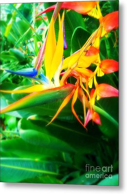 Bird Of Paradise Metal Print by Sacred  Muse