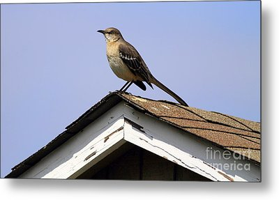 Bird On A Roof Metal Print