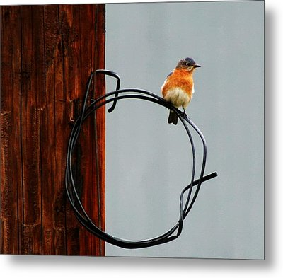Bird On A Wire Metal Print by Carrie OBrien Sibley