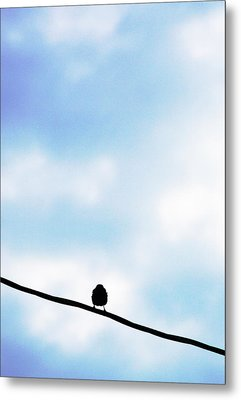 Bird  On A Wire Metal Print by Ed Bricker