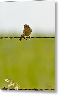 Bird On A Wire Metal Print by Teresa Dixon