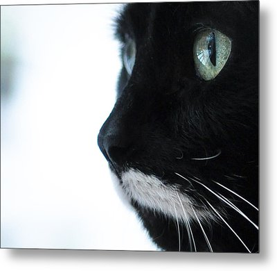 Metal Print featuring the photograph Bird-watching by Ronda Broatch