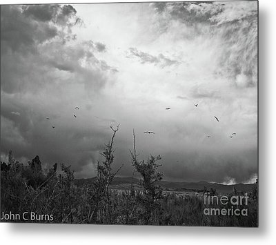 Birds At Mono Lake Metal Print