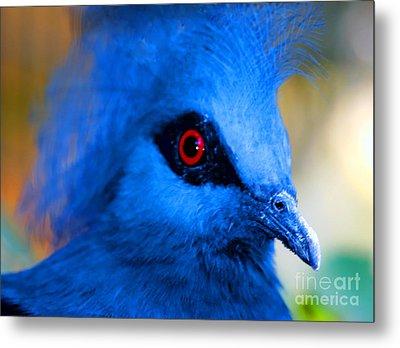 Bird's Eye View Metal Print by Tap On Photo