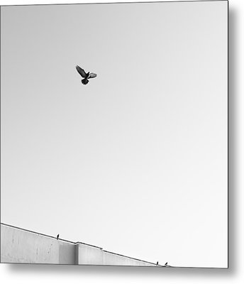 Birds Flying In The Sky Metal Print by Tontygammy + Images