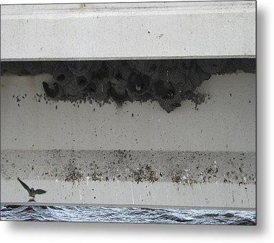 Birds Nest Under The Bridge. Metal Print by Sima Amid Wewetzer