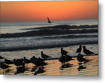 Birds Of A Feather Metal Print by Jose Rodriguez