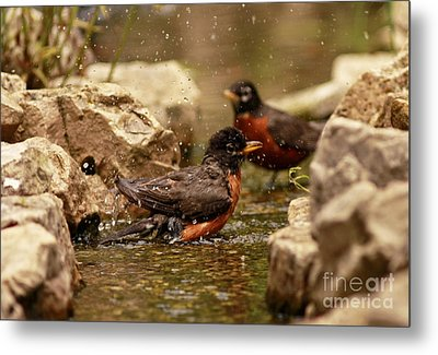 Birds Of A Feather Swim Together Metal Print by Inspired Nature Photography Fine Art Photography