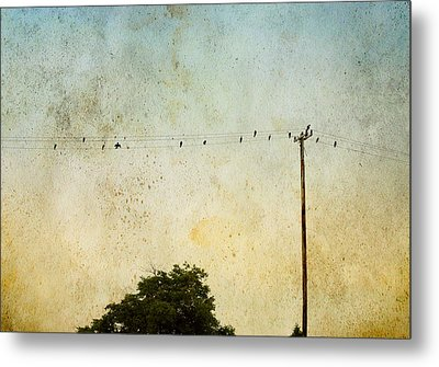 Birds On A Wire Metal Print by Karen Lynch