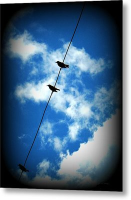 Metal Print featuring the photograph Birds On A Wire by Robin Dickinson