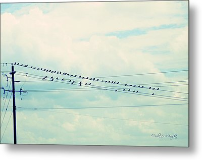 Birds On Wires Blue Tint Metal Print by Paulette B Wright