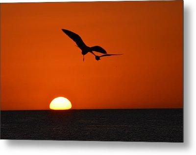 Birds Over Sunset Metal Print