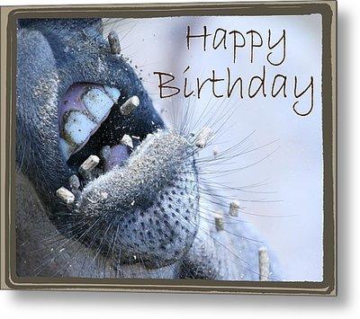Birthday Donkey Metal Print