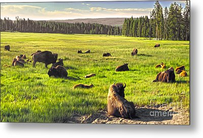 Bison Herd In Yellowstone Metal Print by Gregory Dyer