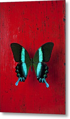 Black And Blue Butterfly  Metal Print by Garry Gay