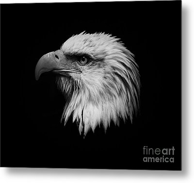 Metal Print featuring the photograph Black And White Eagle by Steve McKinzie