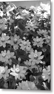 Black And White Flowers Metal Print by Amy Fose