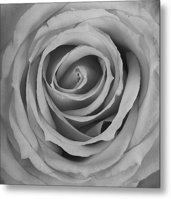 Black And White Spiral Rose Petals Metal Print by James BO  Insogna
